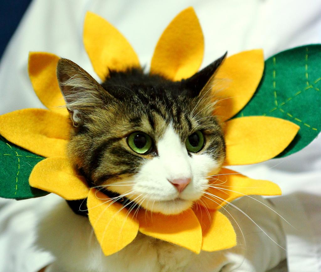 夏だ ! 向日葵だ !! チャー君だ !!!