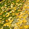 黄葉のラグマット