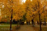 黄葉のキャンパス