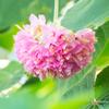 ふしめがちの花