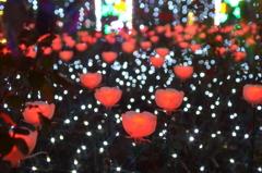 LED薔薇園