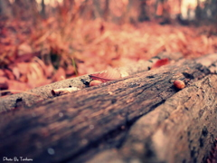 秋のかけら