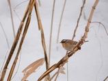 長野県で今話題の珍鳥!