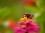 花セセリ*♪…**♬