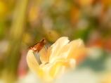 花と華の世界