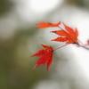 秋から冬へ…