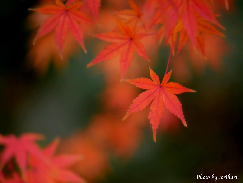 秋はまだここに在る