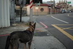 老犬06 どっちに行こうかな~