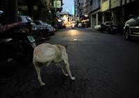 LEICA LEICA M (Typ 262)で撮影した(台湾台南夜の野良犬06)の写真(画像)