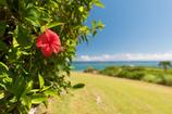 よくある沖縄の写真