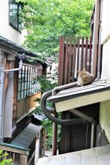 路地裏の猫その2
