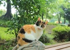 猫の森のアイドル