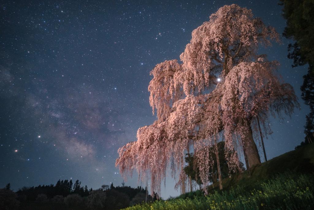合戦場のしだれ桜と天の川