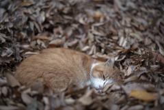 落ち葉のベッド