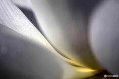 Curve_WL