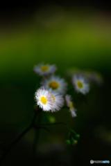 草原の輝き