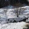 庭雪だるま。