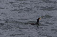 浮く鳥飛ぶ魚
