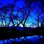 黄昏の冬桜。