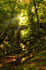 秋  菊池渓谷