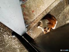 こんにち、猫さん 2016▷▶︎autumn