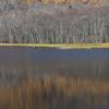 池面のパレット Ⅱ