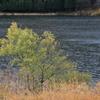 中綱湖の秋