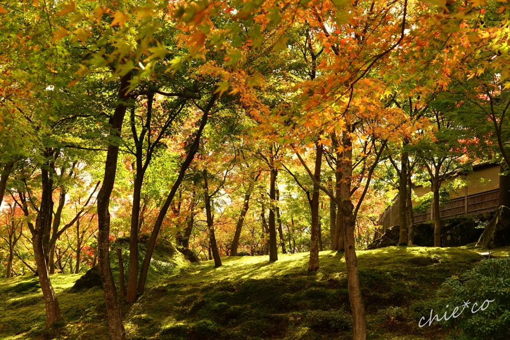 箱根美術館庭園-177
