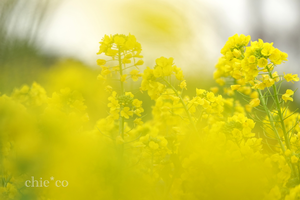 吾妻山公園-203