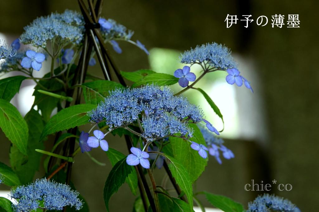 瀬戸神社-274