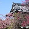 鎌倉-165
