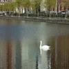 白鳥。。2