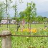 花菜ガーデン-028