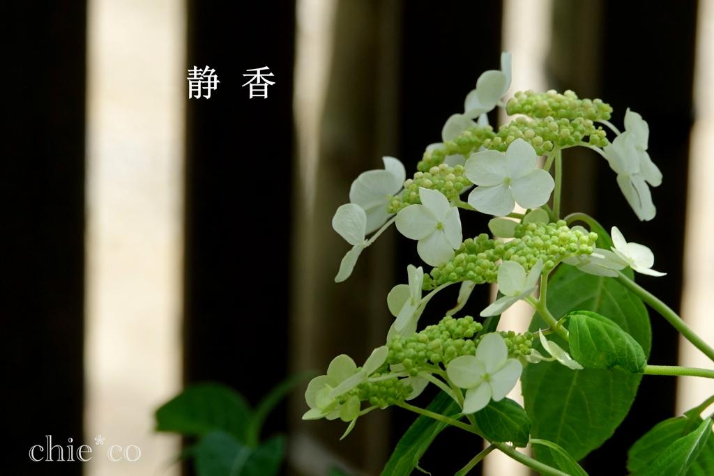 瀬戸神社-233