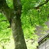 円覚寺-253