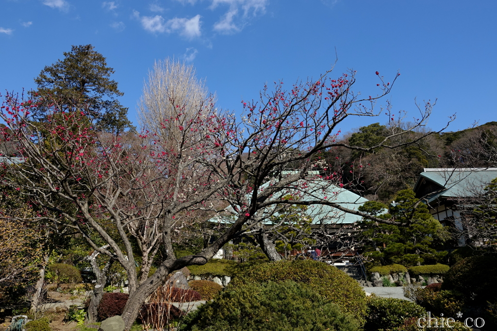 鎌倉-193