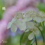 SONY SLT-A77Vで撮影した(瀬戸神社~山あじさい-466)の写真(画像)
