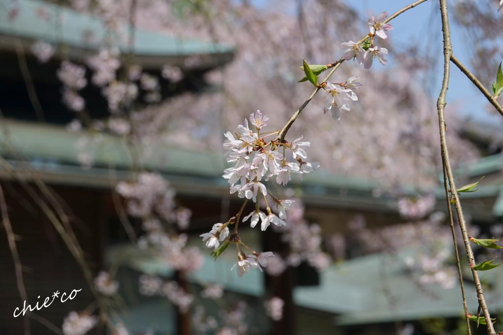 鎌倉-443