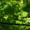 久良岐公園-227