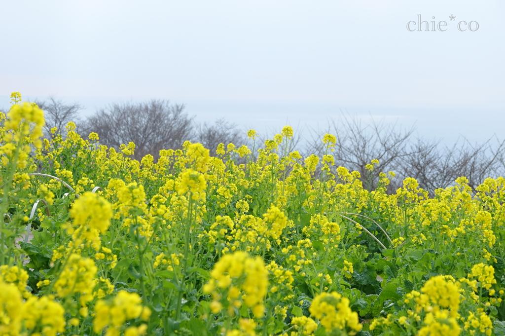 吾妻山公園-198