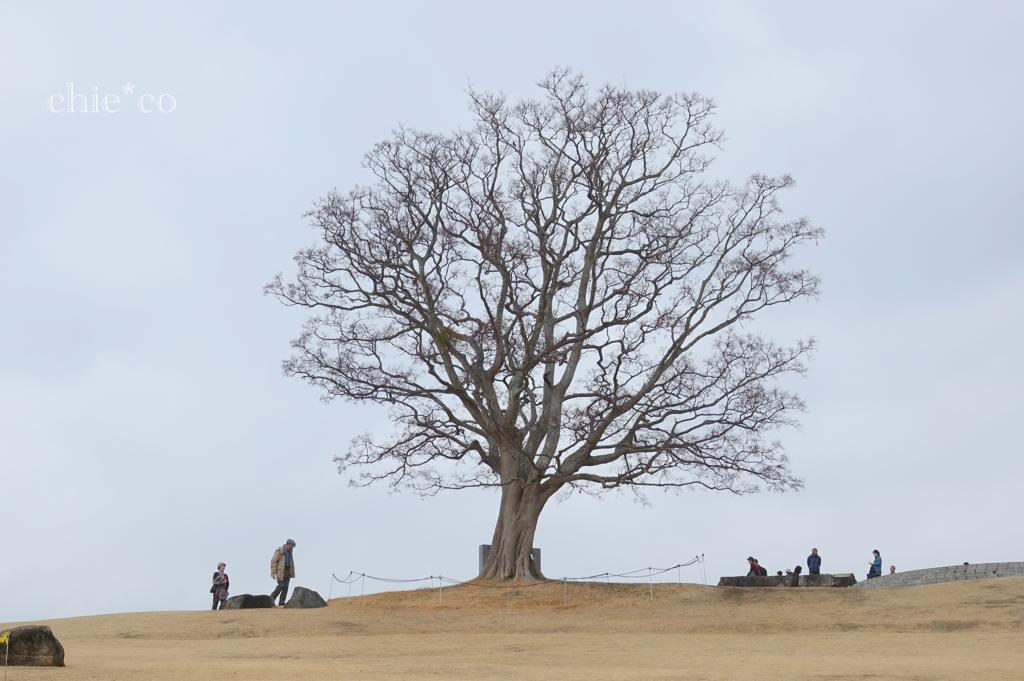 吾妻山公園-221