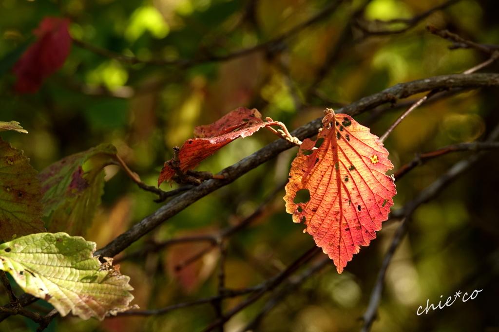 箱根湿生花園-210