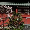 鎌倉-168
