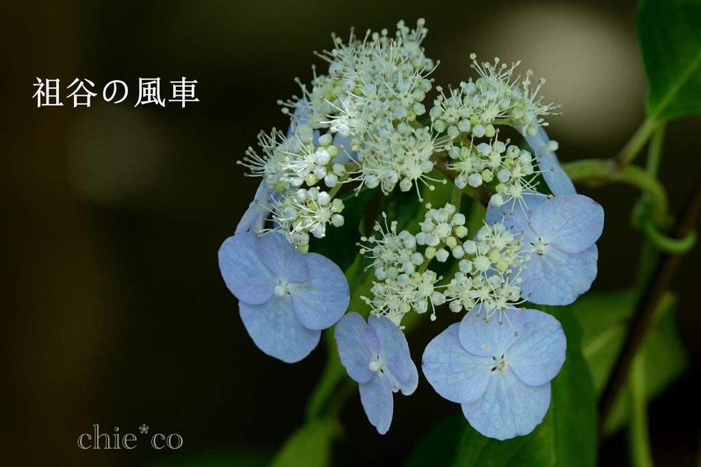 瀬戸神社-275