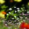 里山ガーデン。。-259