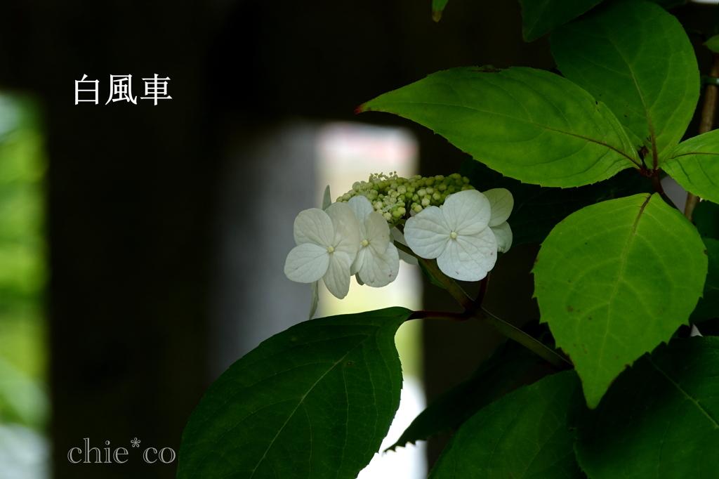 瀬戸神社-229