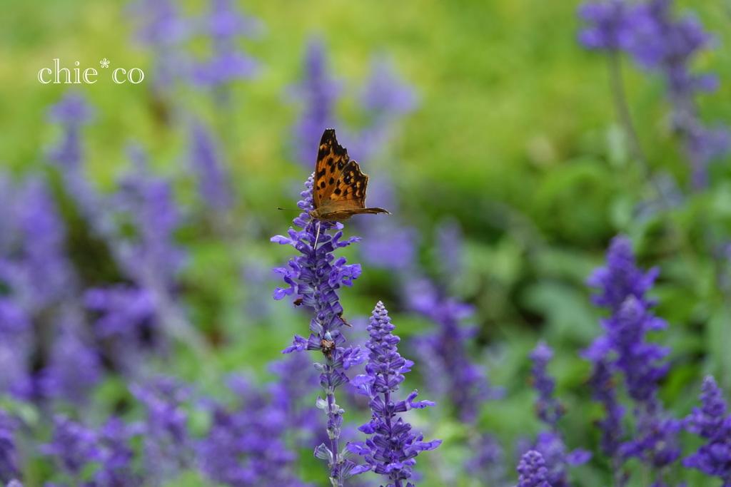 山手イタリア山庭園-324