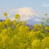 吾妻山公園-274