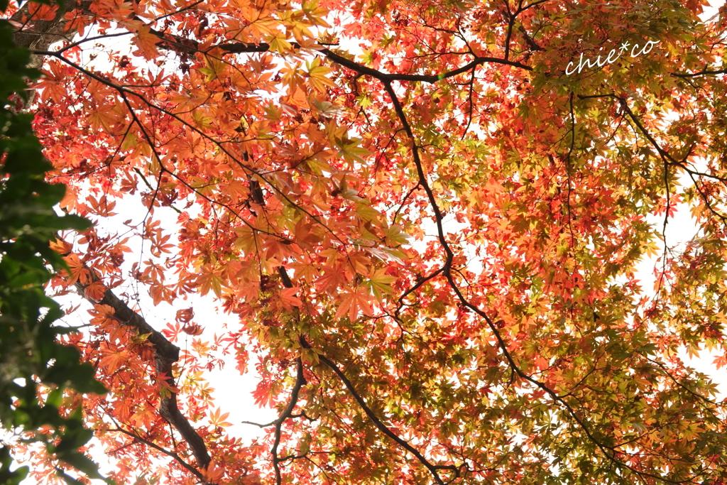 箱根美術館庭園-213