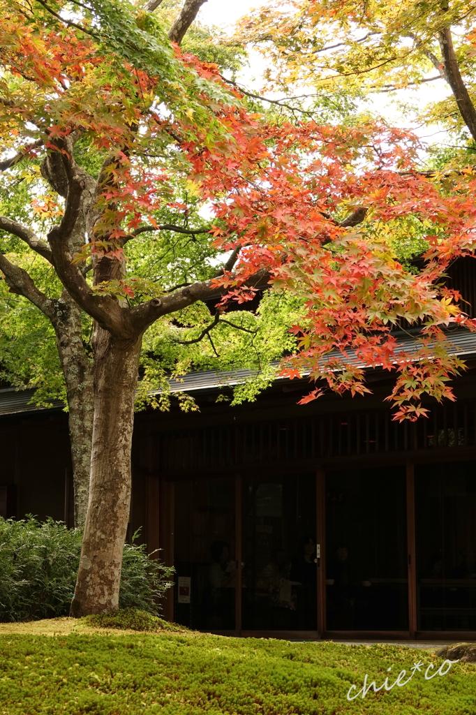 箱根美術館庭園-189